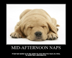 Poster-MIDAFTERNOON+NAPS